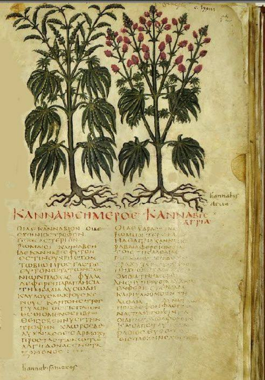 Cannabis Dioscorides Pedanius De Materia Medica |www.artextiles.org