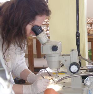 Μελέτη αρχαίου υφάσματος στο στερεοσκόπιο. Φωτογραφία Χ. Μαργαρίτη.